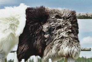 fleece1