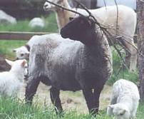 flock4